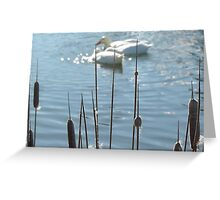 Feathering...Cornish pond. Greeting Card