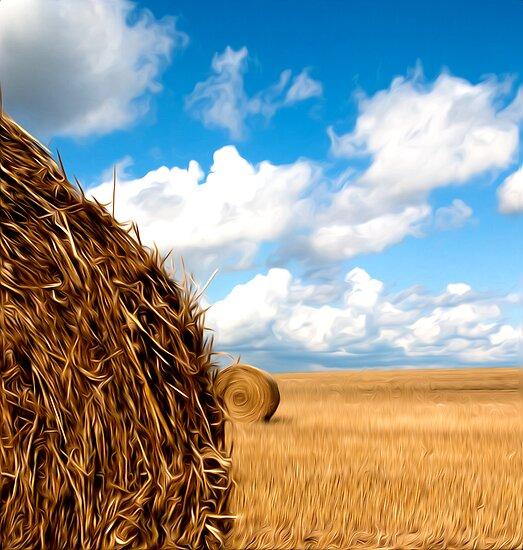 Hay Field by Darren Allen