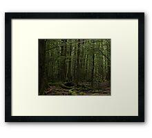 Fangorn in Paradise? Framed Print