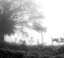 A Cow in the Mist by Susan  Morry