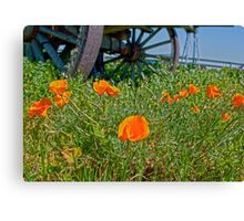 California State Flower...The Poppy Canvas Print