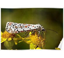 Crimson-Speckled Footman Poster