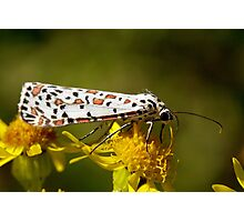 Crimson-Speckled Footman Photographic Print