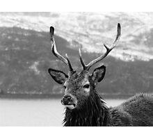 Damp Deer Photographic Print