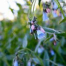 Frosty Flowers by illPlanet