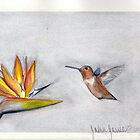 hummingbird and bird of paradise by john  garcia