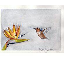 hummingbird and bird of paradise Photographic Print