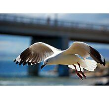 Seagull - San Remo Photographic Print