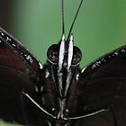Butterfly/ Eggfly! by KiriLees