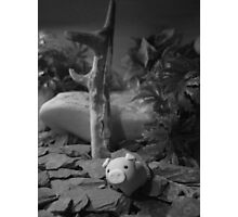 rubber piggy Photographic Print