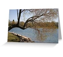 Reaching Willow Greeting Card