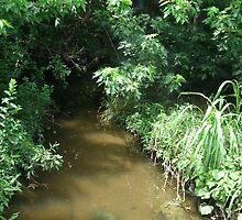Derby Creek by Scraylan