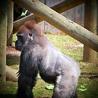 Gorilla  by Nora Caswell