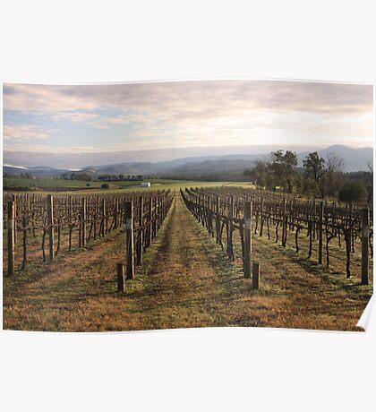 Vineyard - Yarra Valley Poster