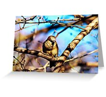 Sparrow in Central Park Greeting Card