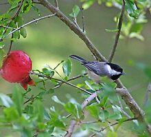 Chickadee in a Pomogranete Tree by Eileen McVey