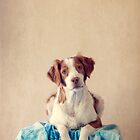 Chazer Sitting Pretty by Helen Green