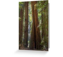 Redwood Lean Greeting Card