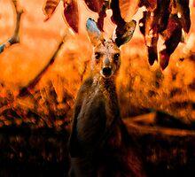 Fiery Roo by BoB Davis