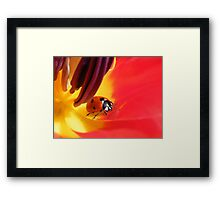 I found my way into your heart... Framed Print