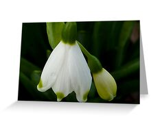 Snowdrops - Snow Belle Greeting Card