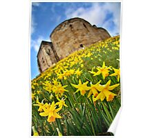 Early Daffodils In York Poster