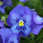 Blue Purple Flower by Anthony Radogna