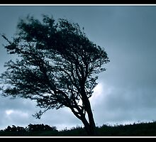 Windswept Tree: Devil's Dyke by JLaverty