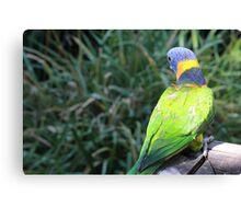 Rainbow Lorikeet - Adelaide Zoo Canvas Print