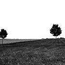 le champs by marie pierre de cara