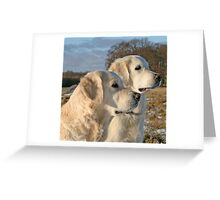 Golden Retrievers Gina and Ditte Greeting Card