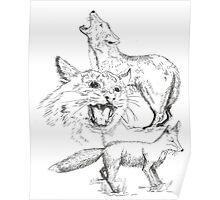 Colorado Predators  Poster