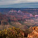 Grand Canyon North Rim, AZ by Linda Sparks
