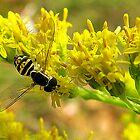 Yellow Daze by sillyfrog