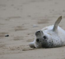 Grey Seal Pup by Timesniper