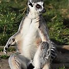Ring-tailed Lemur by GillBell