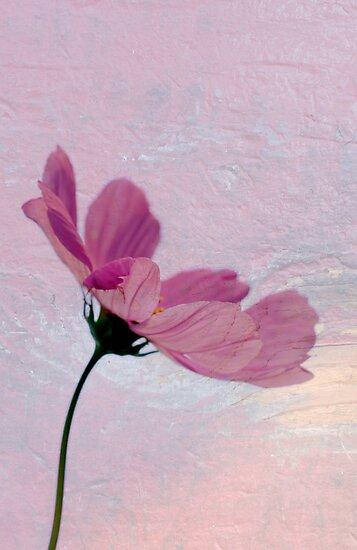 Pretty In Pink by Renee Blake