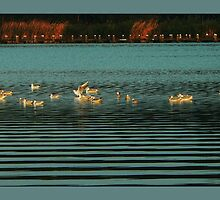 birds in ripples... by LisaBeth