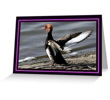The Red Crested Pochard Greeting Card