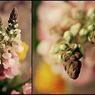 Floral Macro by jujubean