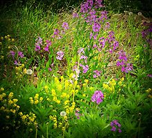 Purple and Yellow Wild Flowers by Nora Caswell