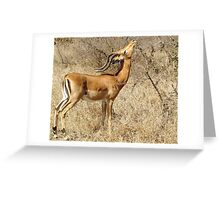Impala going for the goodies - Moremi Botswana Greeting Card