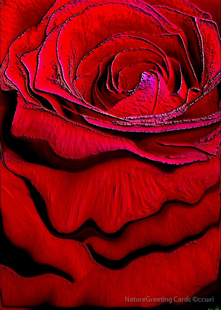 Red Rose by NatureGreeting Cards ©ccwri