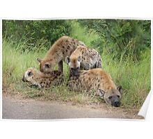 Hyena Family  - Kruger national Park Poster