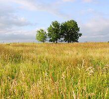 Summer Field by Karen  Rubeiz