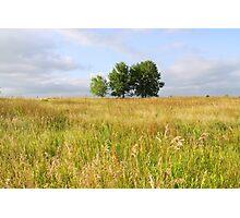 Summer Field Photographic Print