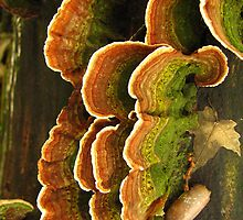 Colorful Fungus by Deb Fedeler