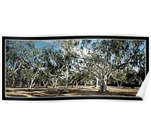 white ghost river gums Poster