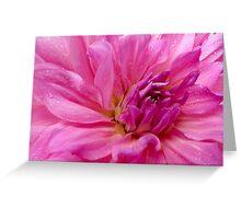 Dahlia - Ballerina Belle Greeting Card