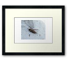 Nature Framed Print